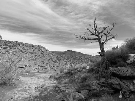 Western Shadows Gallery | Desert Tree