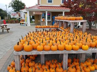 Pumpkin Painting 2018
