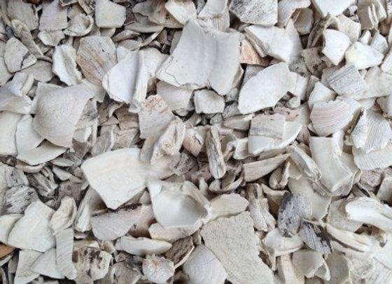 Cape Cod Sea Shells