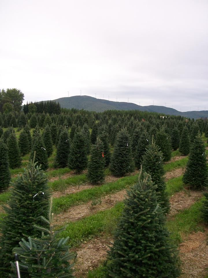 Osborne Nursery Christmas Trees