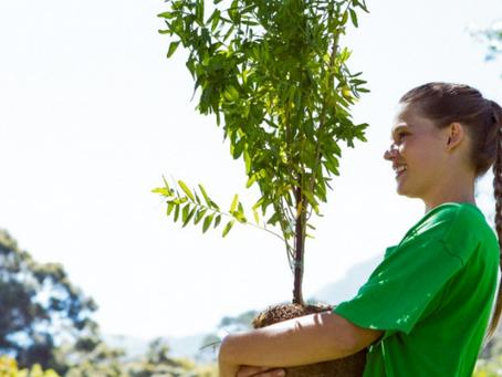 Importância e cuidados na escolha da Consultoria Ambiental