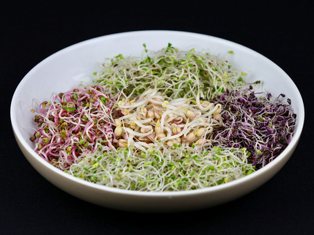 Top 7 Reasons for Eating Sprouts