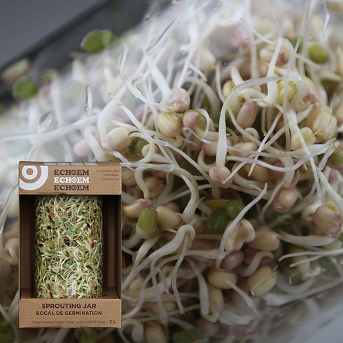 Sprouting & Jar Kit 1600x1600 1.jpg