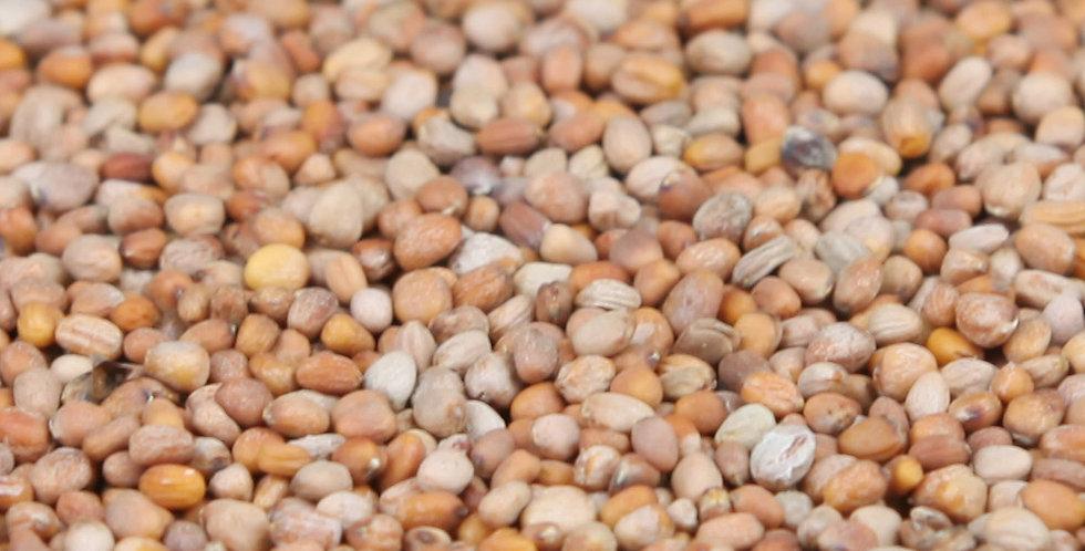 Organic Daikon Radish Seeds
