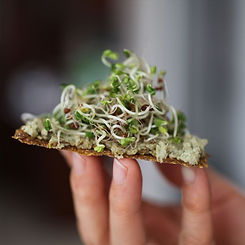 Product 1000x1000 Cracker Sprouts.jpg