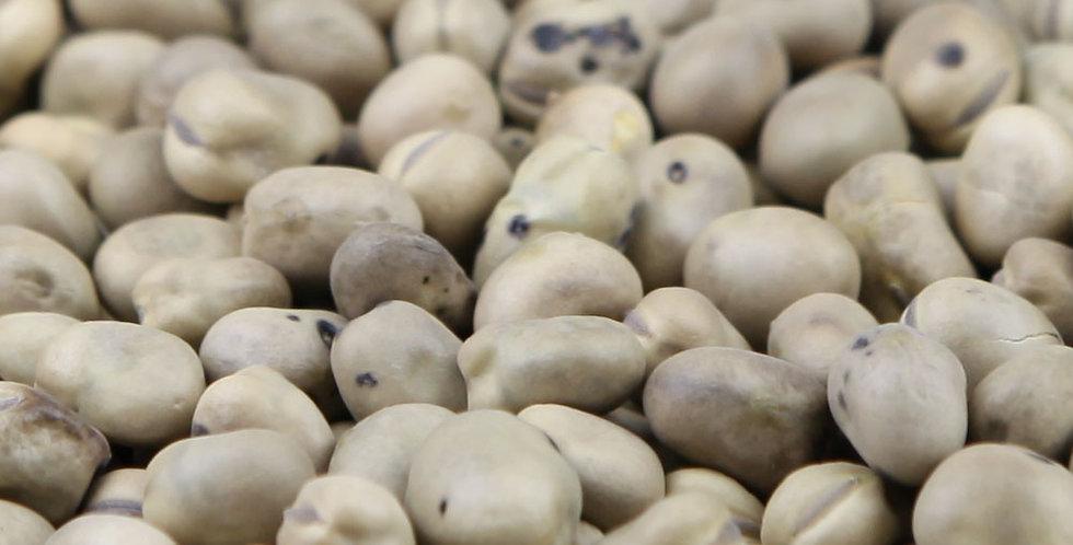Organic Fava Bean