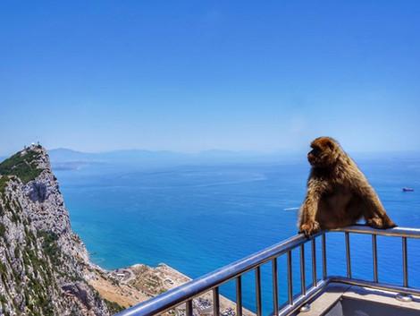COVID-19 w Maladze - brak kwarantanny dla owiedzajacych Gibraltar
