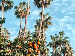 Grudzień - Sezon na Pomarańcze