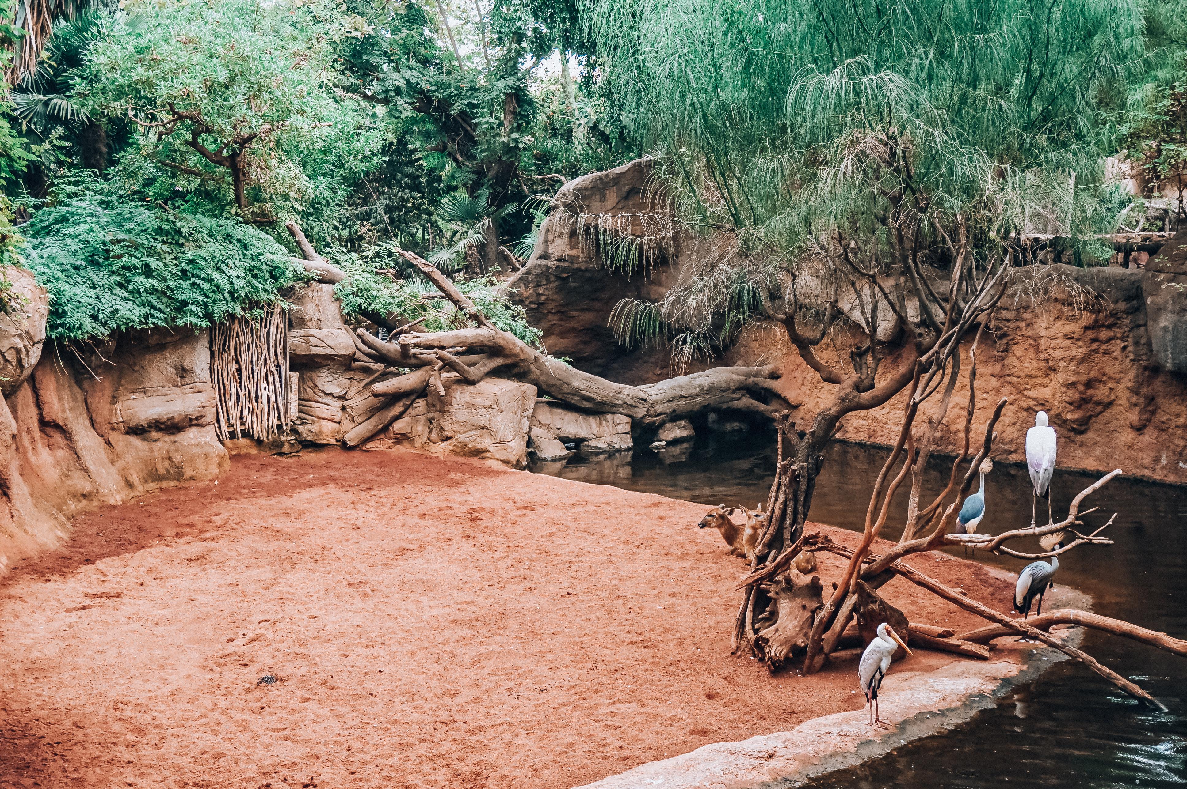 Malaga dla dzieci-Bioparc Fuengirola