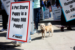 Puppy Mill Project march