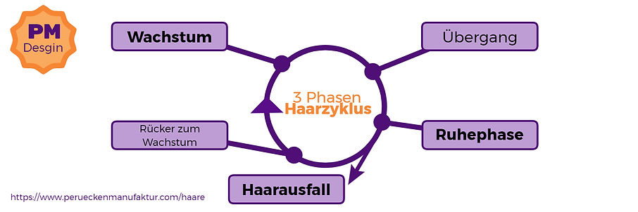 3 Phasen Haarzyklus