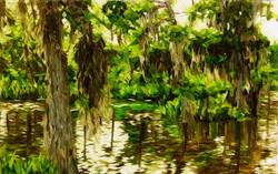 Dans les bayous