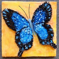 Papillon Noella