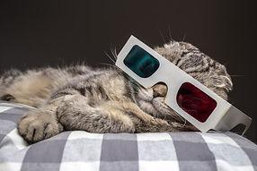 funny scottish fold cat watching a movie