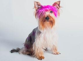 pink dog-1.jpg