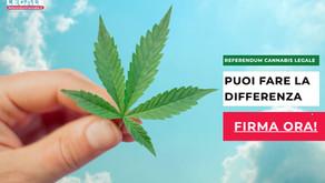 Cannabis legale: il referendum italiano