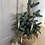 Thumbnail: Natural tree decorations