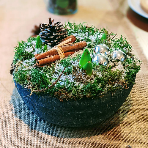 Amaryllis Winter Planter
