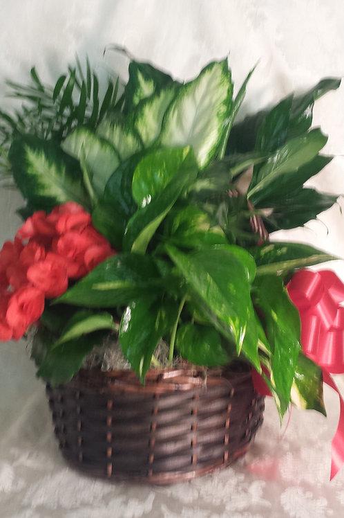 """Floral/Plants -""""Europlant Garden Basket #2"""""""