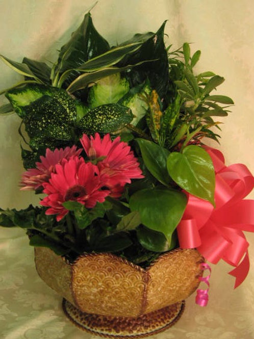 """Floral/Plants - """"Variety Plants in Metal Container"""""""