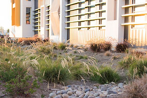 Harris Building - Landscape Architect.jp