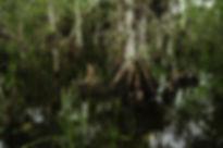 wraith island swamp 2.jpg