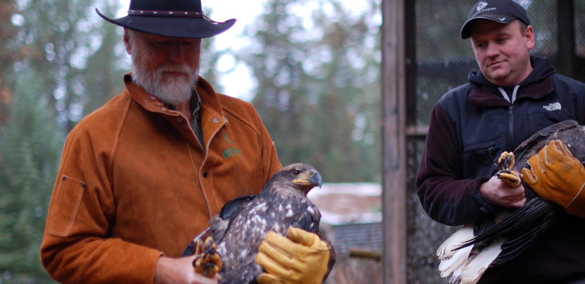 More Tribal eagles.JPG