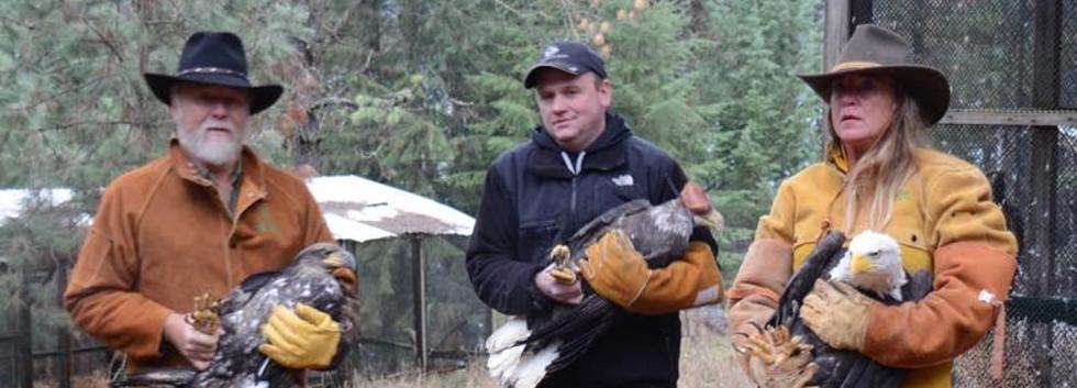 Tribal Aviary Bald Eagles.JPG