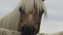 Bijzonder krachtige jonge vrouw heelt door hulp van de Paarden!