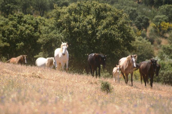 Training Vertalen voor dieren in Portugal