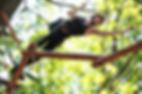 Parcours spotif parc aventure de l'isle jourdain et du Vigeant (86)