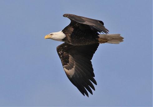eagle steve.jpg