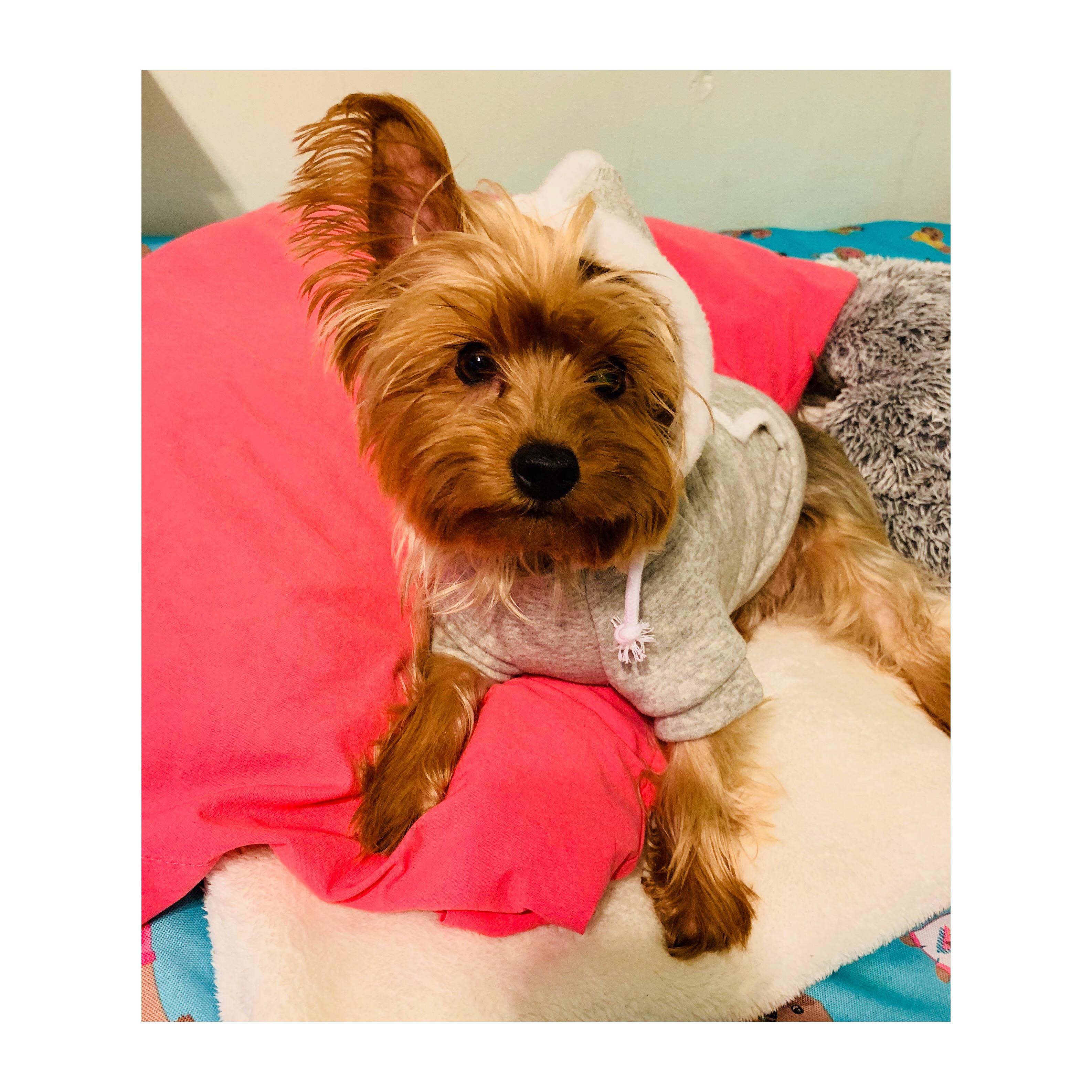 Lola w. Wag Hoodie.jpg