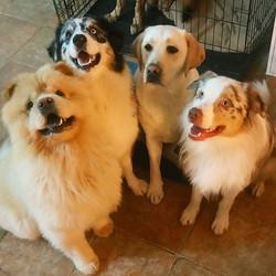 יש תמונות שחייבים לשתף!!! 😍_בוף, סניף, רוזי, ובוץ מדגמנים לי בפנסיון!_ )__רז סמאי אילוף כלבים ופנסי