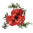 Remember Lest We Forget Logo Rosemary and Poppy