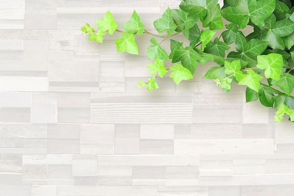 壁と葉っぱ