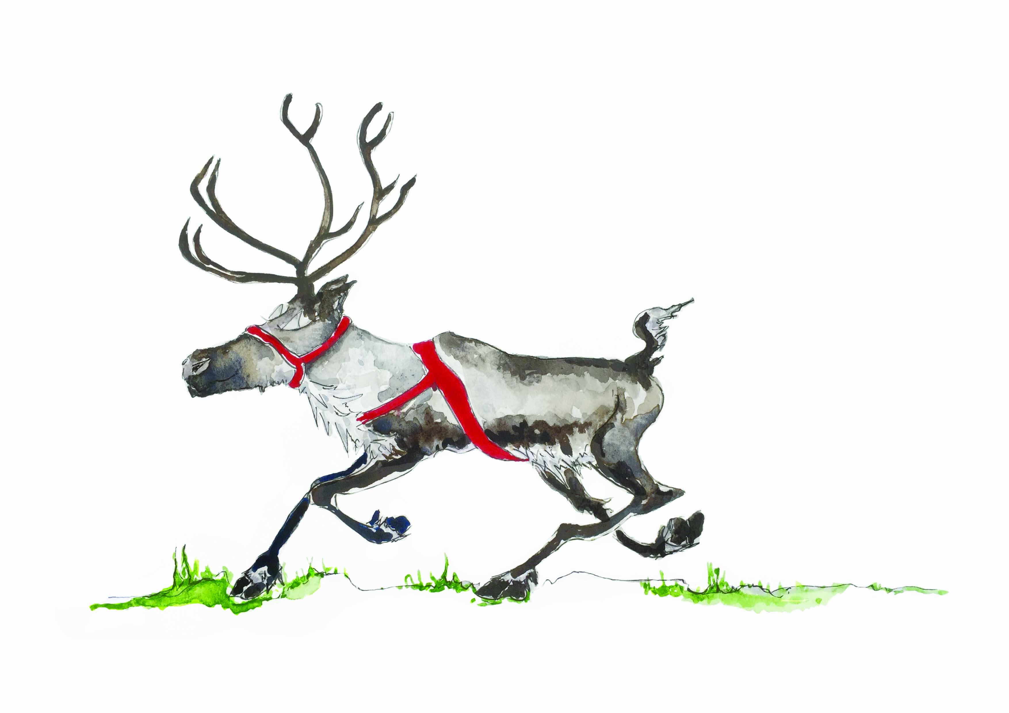 Runaway Reindeer
