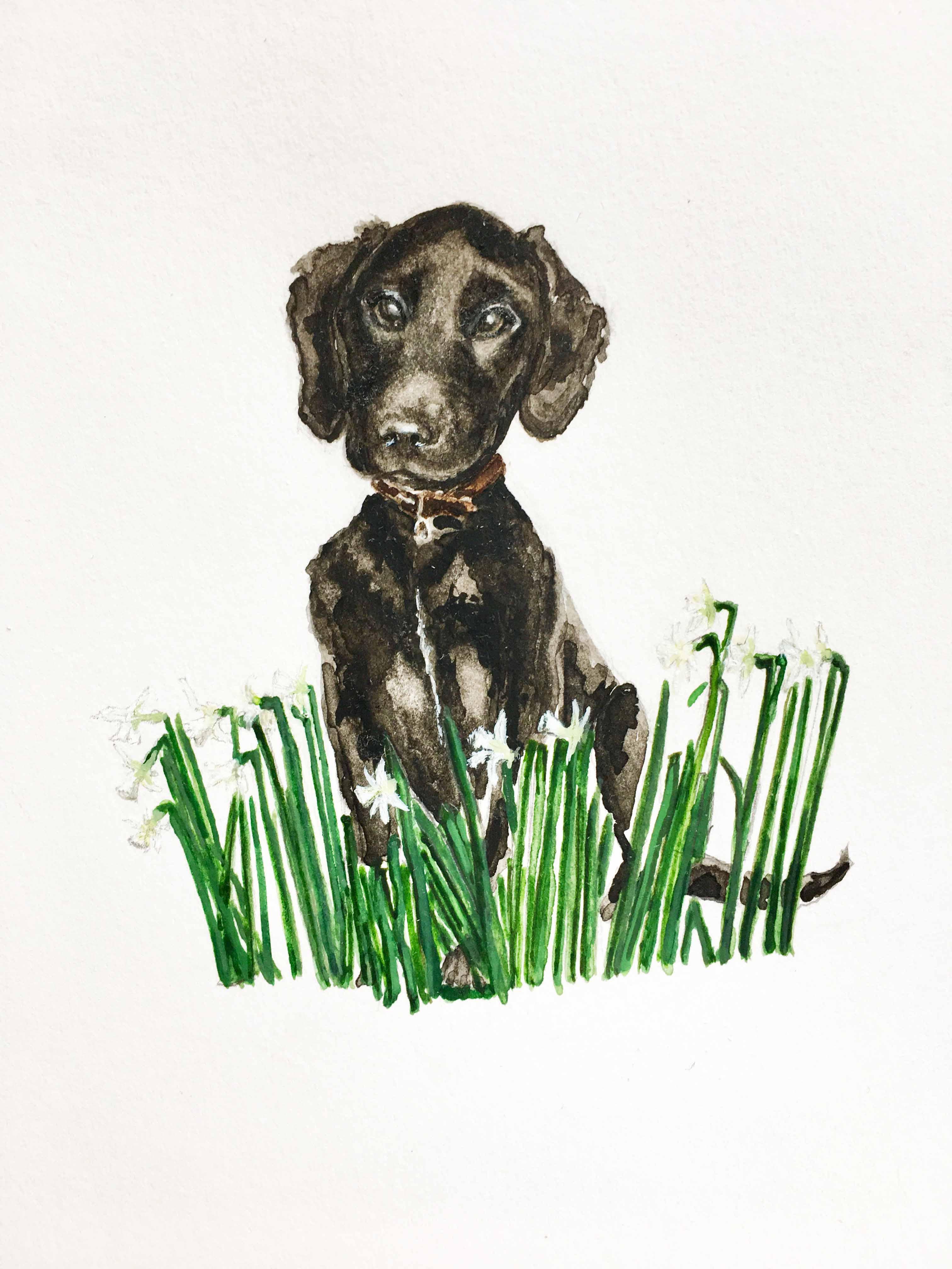 Labrador puppy playing