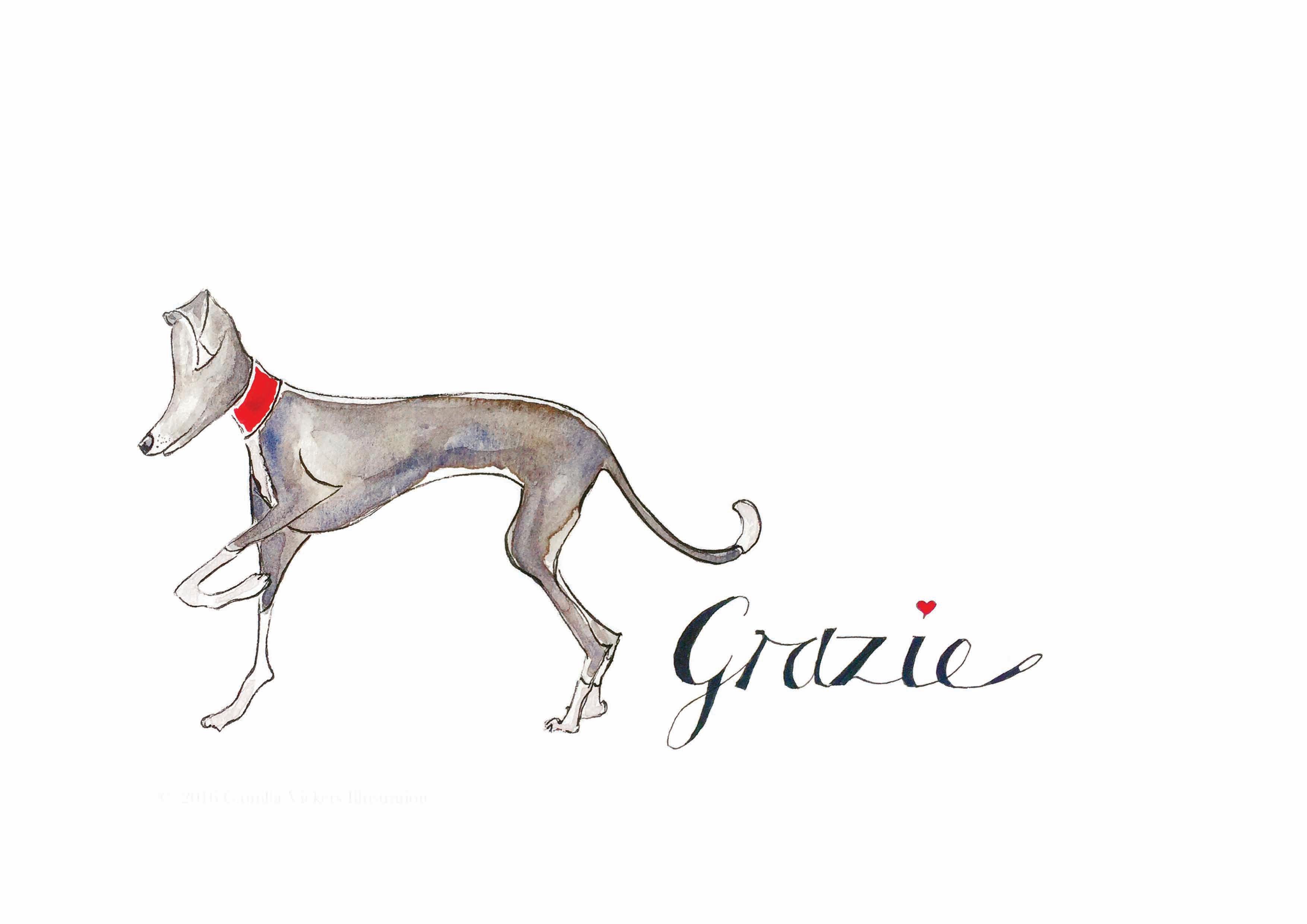 Gloria Grazie Greyhound