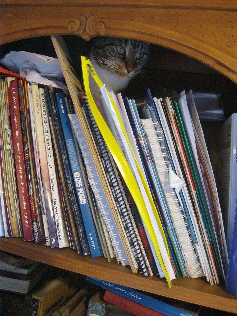 Guardian of the bookcase - Erme Lander