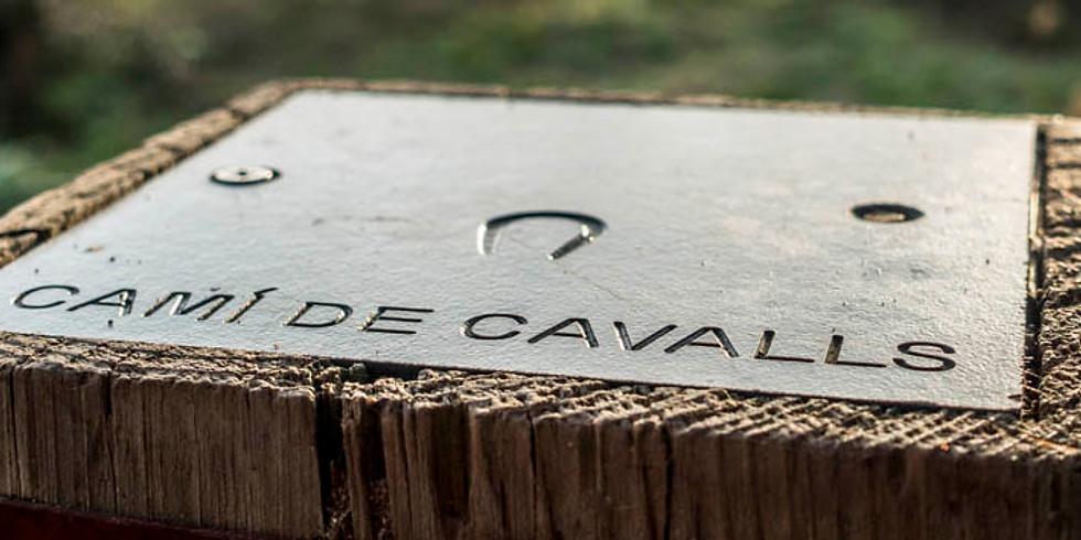 CAMI DE CAVALLS -  El repte de Menorca