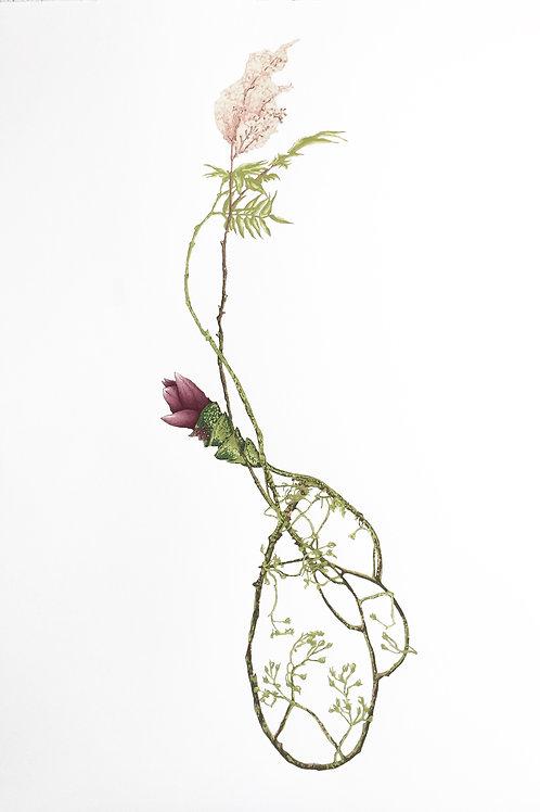 Hidden Lily Entangled by Baby Rose & False Spirea