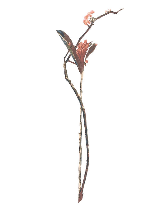 Red Ginger Wrapped with Cherry Blossom Branch