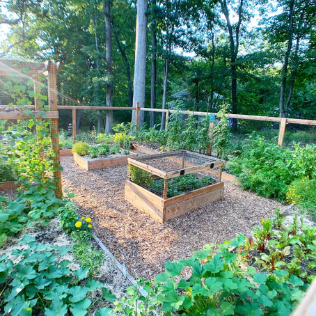 Garden Spotlight: Anel Dzafic