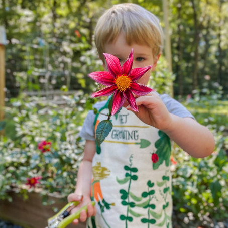 What's growing in the garden this Fall?