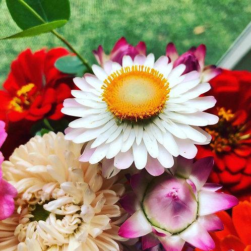 8 Week Flower Share