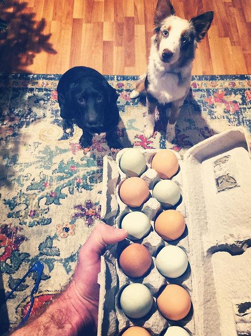 10 Week Free Range Egg Share (1 dozen per week)