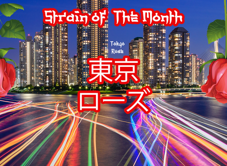 Strain of The Month of June: Tokyo Rose
