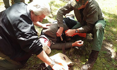Wilderness First Aid How to treat a patient