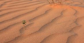 The Economic Impact of Australia's Drought